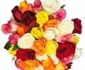 colorful roses online to philippines