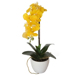 send moth yellow orchid plant with pot to angeles city