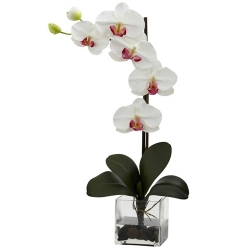send moth white orchid plant in pot to angeles city