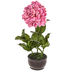 send potted pink hydrangeas plant to angeles city
