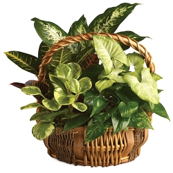 send emerald garden basket to angeles city