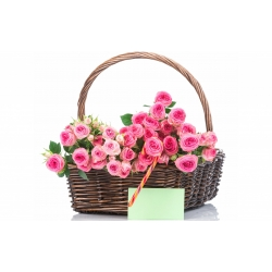 36 Pink Roses in Flower Basket Send To Angeles City Philippines