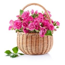 ​36 Pink Roses with Green Arrangement in Basket Send To Angeles City Philippines