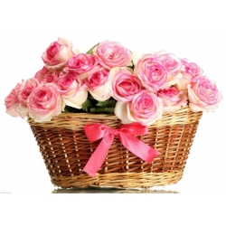 24 Pink Roses in Basket Send To Angeles City Philippines
