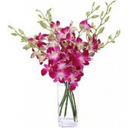 ​6 Pink Orchids send to angeles city philippines