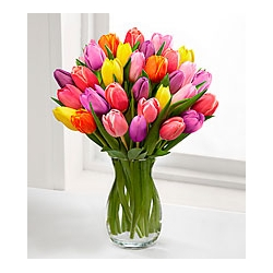 24 assorted tulips send to angeles city philippines