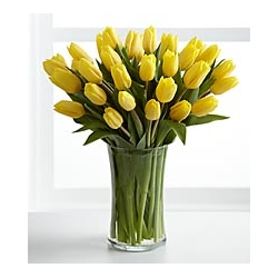 ​24 yellow tulips send to angeles city philippines