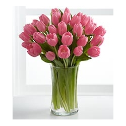 24 Pink Tulips send to angeles city philippines