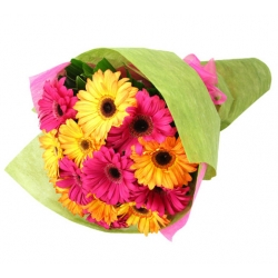 12 Pink and yellow gerberas Send To Angeles City Philippines