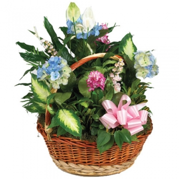 send silk and green garden basket to angeles city