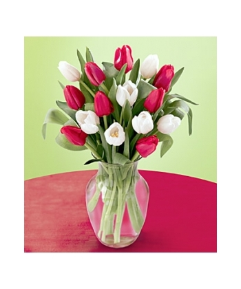 Send 12 Red And White Tulips With Free Vase To Angeles City Pampanga